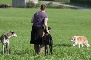hunde-einschaetzen-und-koerpersprachliches-arbeiten