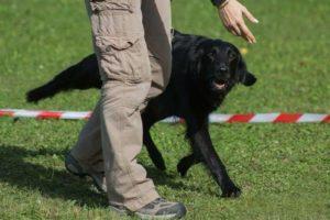 seminar-menschen-die-mit-hunden-sprechen